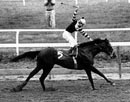 Click here to see pictures of the legendary Seattle Slew.